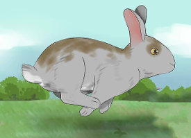 Run-Away Rabbit